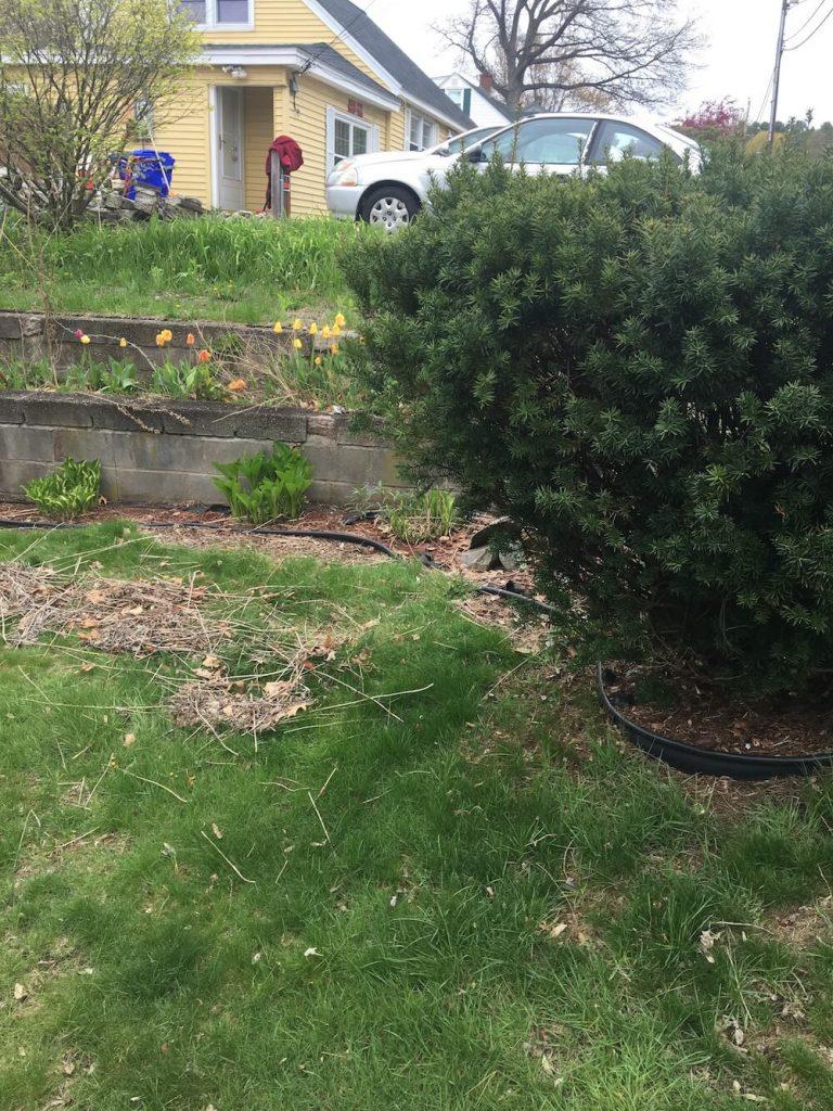 Hedge, garden