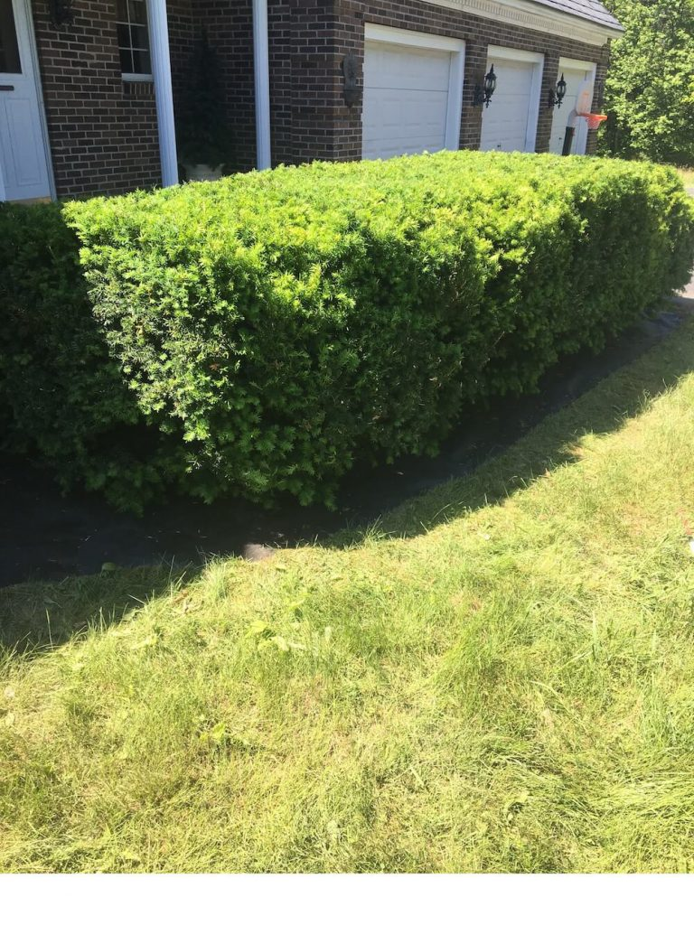 After hedge trim