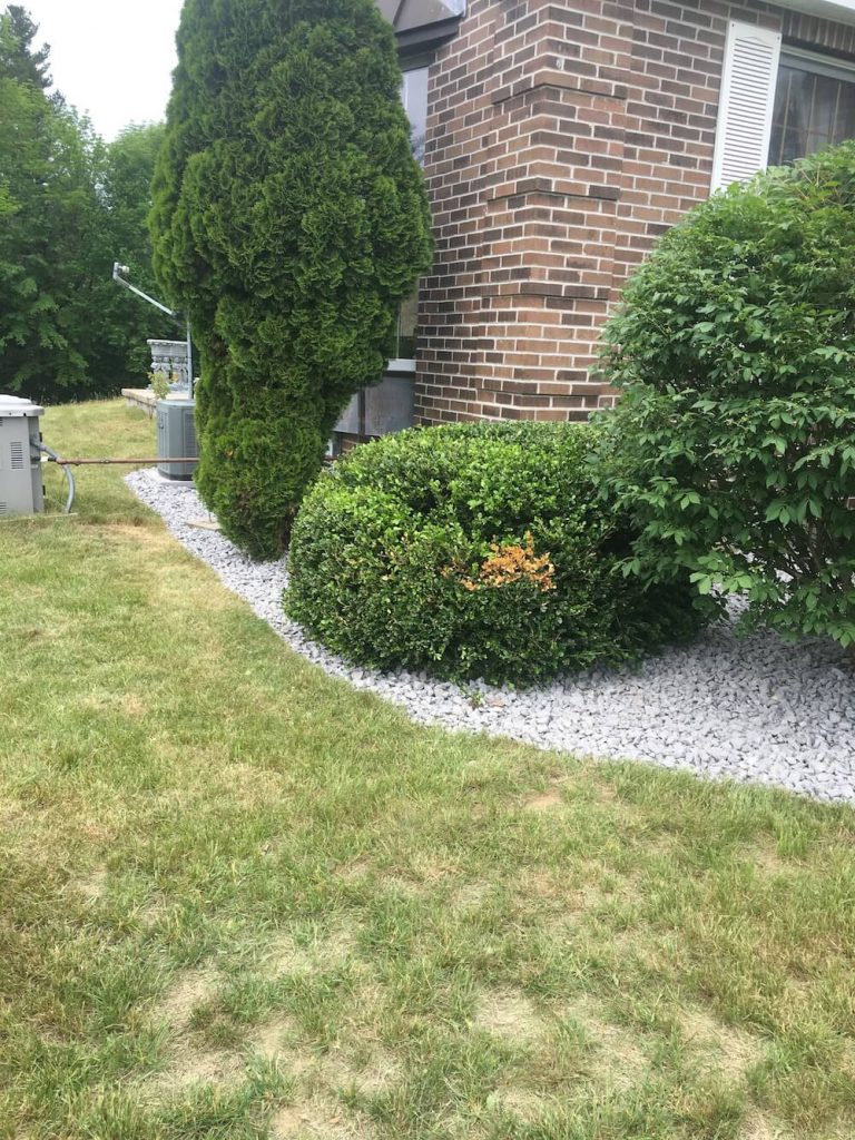 Variety of hedge, crushed stone
