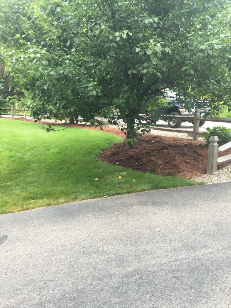 before tree, mulch