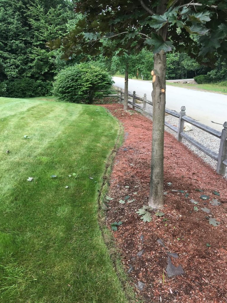 edging with trees, mulch