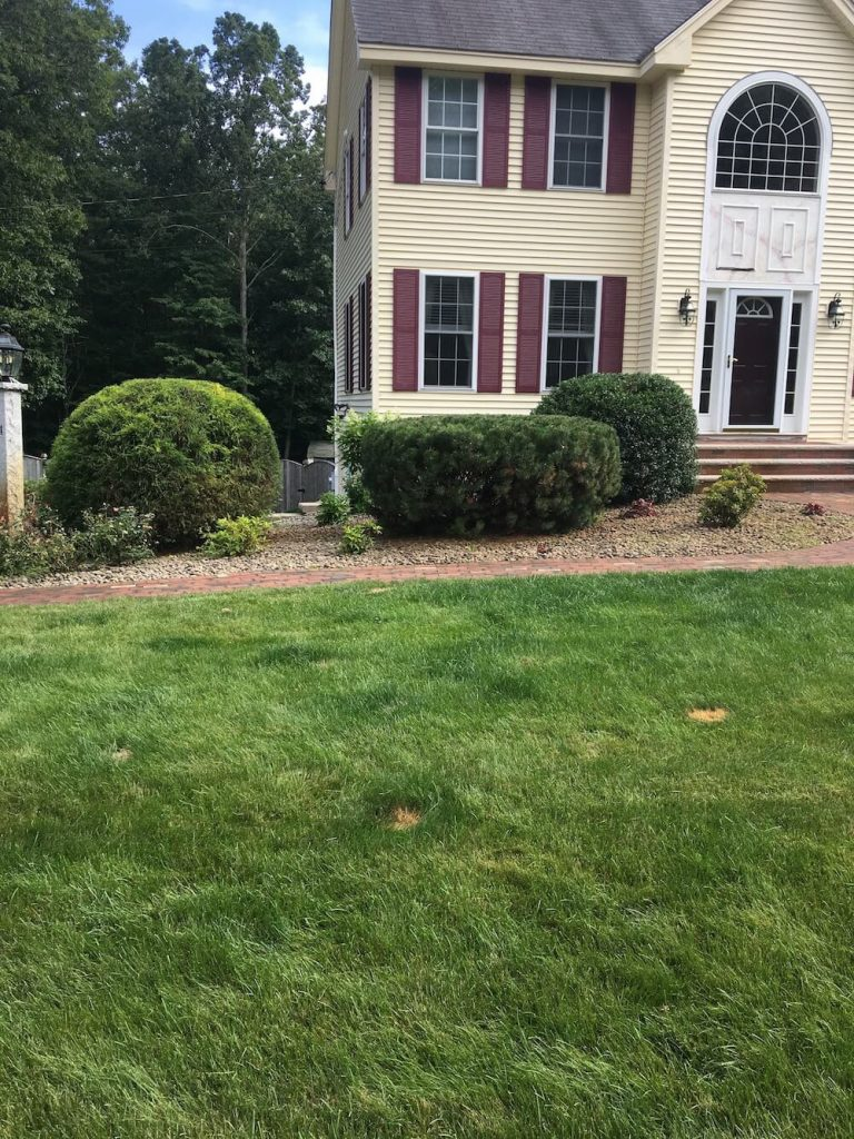 Front yard hedge trim