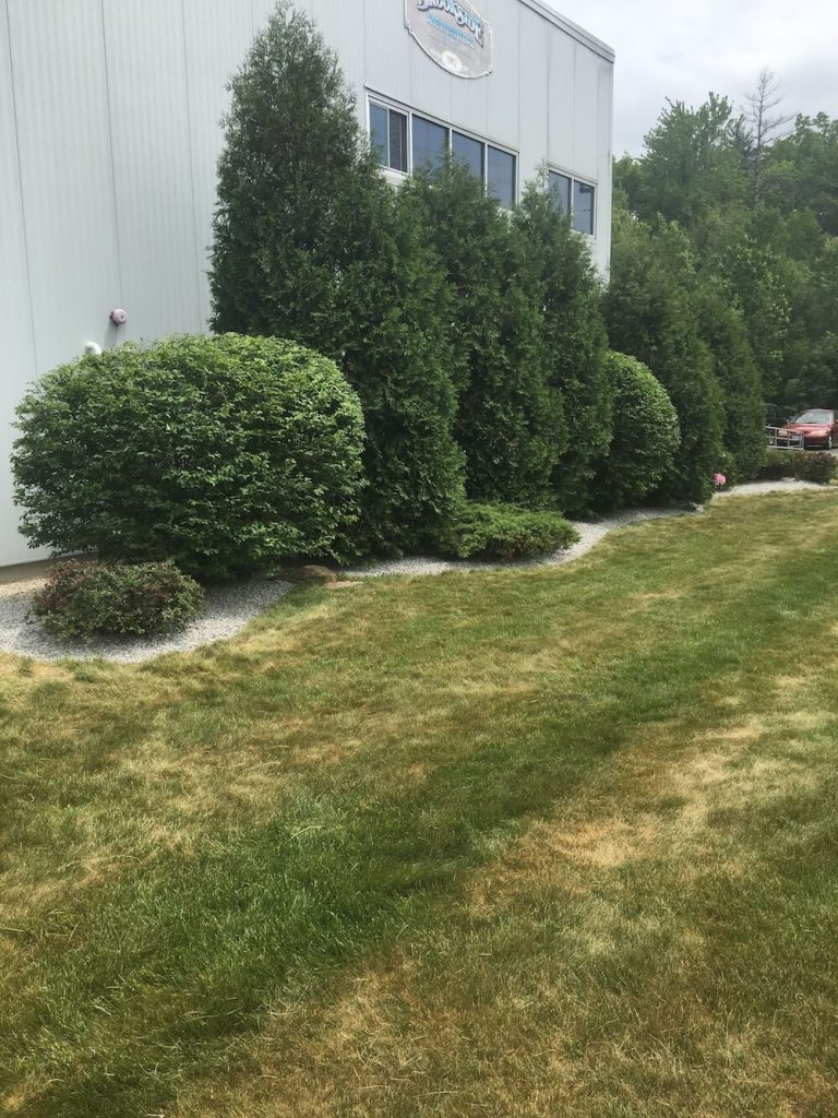 multiple hedge trim, crushed stone