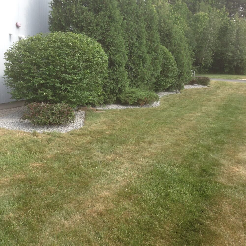 crushed stone, multiple hedge trim