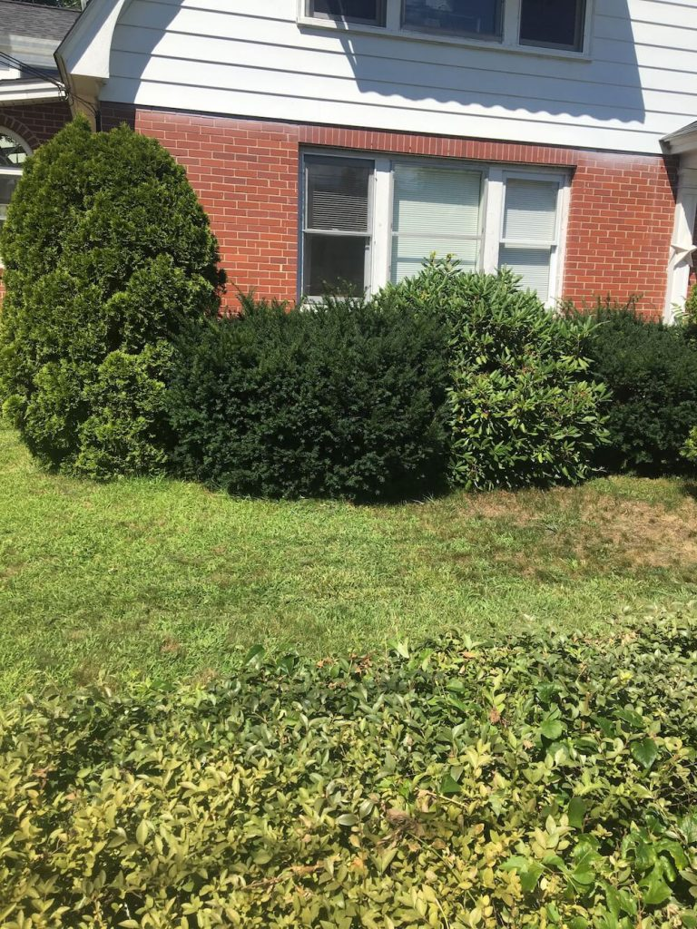 before front yard hedge trim