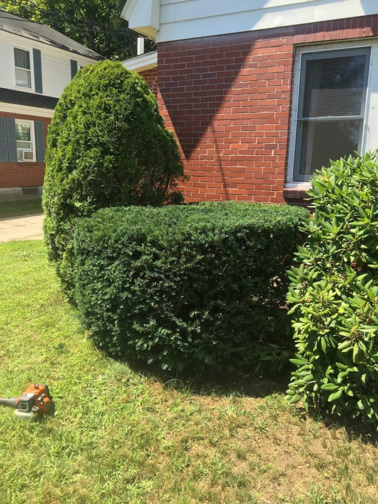 front of house hedge trim