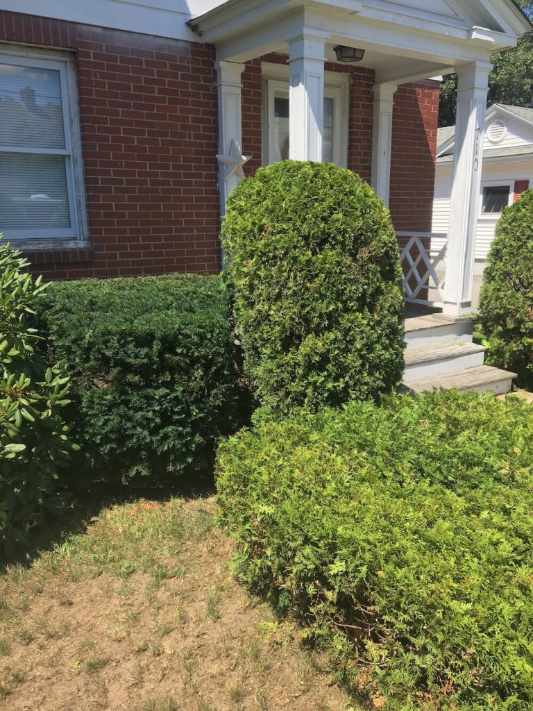 walkway hedge trim