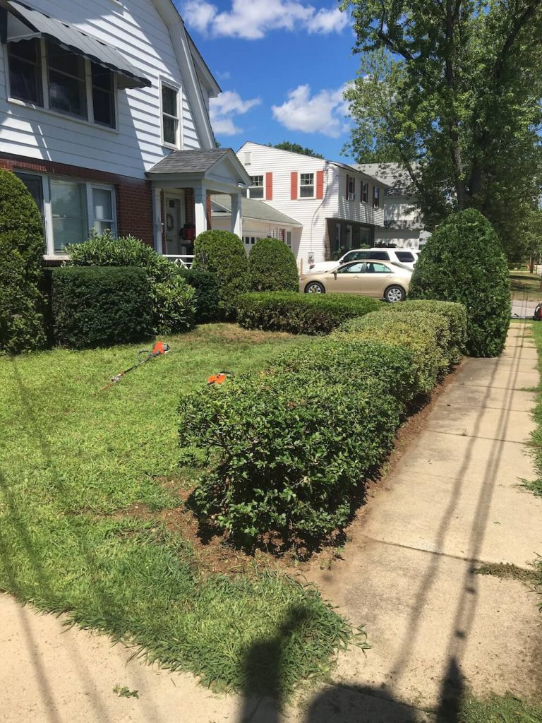 hedge trim entire yard