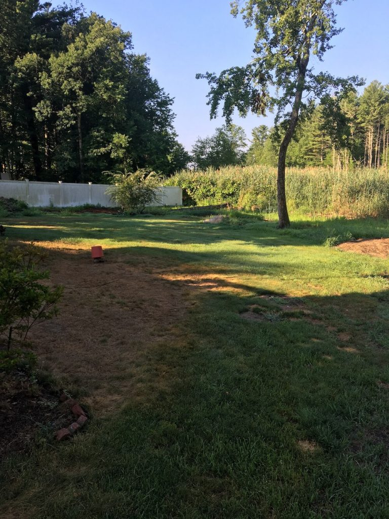 Before yard renovation