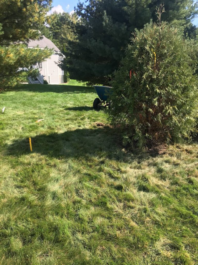 Tree planting, edging Merrimack NH