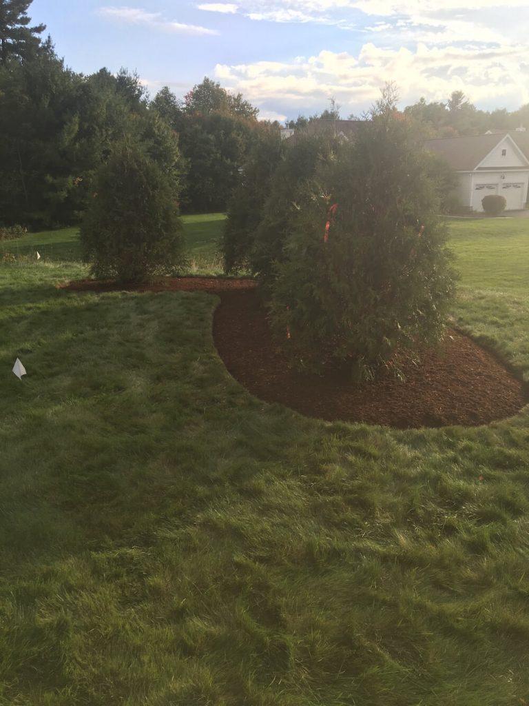 Bark mulch, red, arborvitae, Merrimack NH
