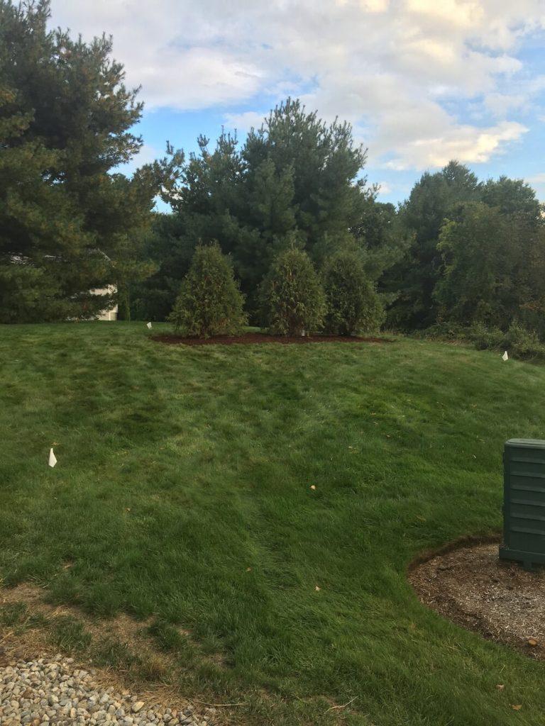 Arborvitae, edge, garden, bark mulch, Merrimack NH