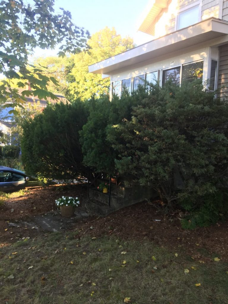 Hedge trim before, Manchester nh