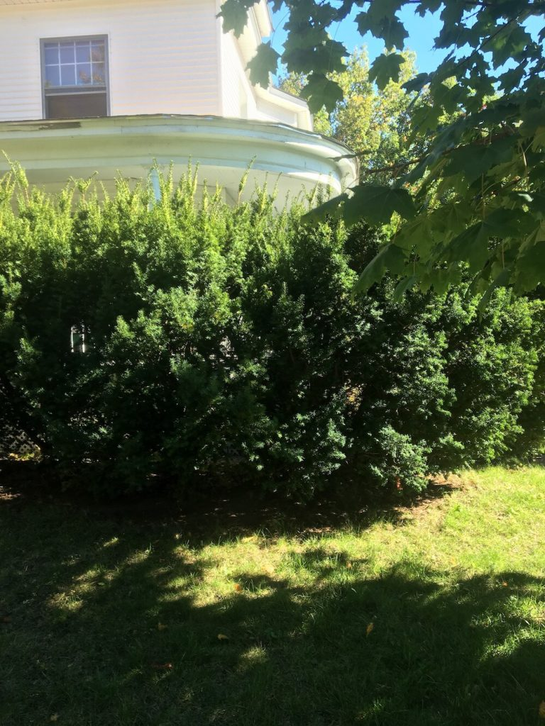 Shrubs, Trim, Manchester NH